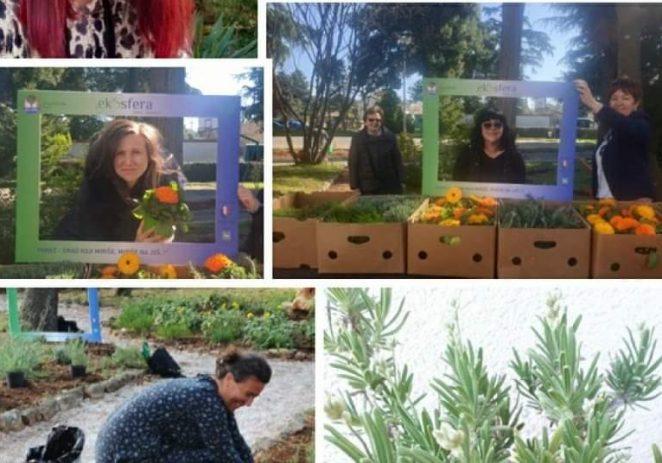 Poreč bogatiji za urbani pčelinjak te projekte zaštite i sadnje aromatičnog bilja i autohtonih vrsta