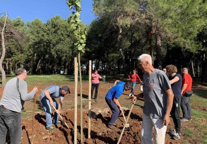 """U Poreču u sklopu akcije """"Zasadi stablo, ne budi panj"""" zasađeno više od 600 stabala"""