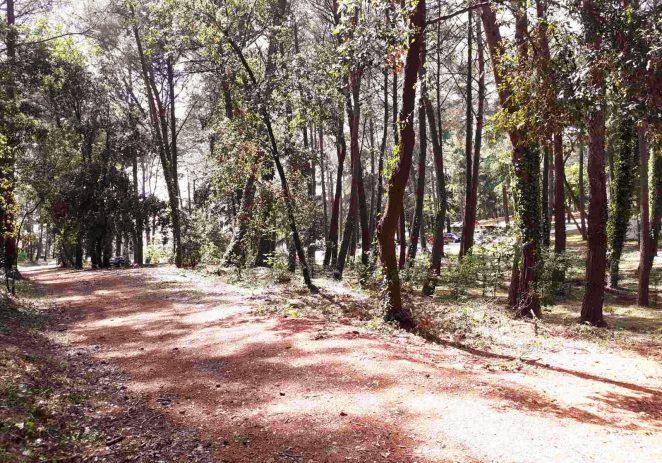 Uređena šuma u naselju Bolnica za ugodniji boravak šetača i rekreativaca