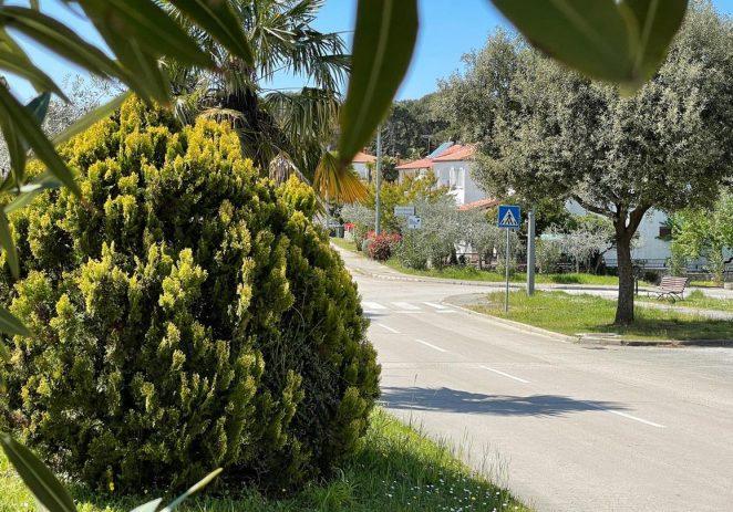U ponedjeljak, 21. lipnja nastavljaju se radovi na zaštiti ukrasnog bilja na javnim zelenim površinama Poreča