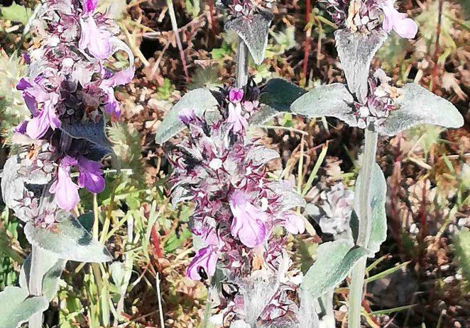 """Porečka eko-oaza Bio Istre """"raste"""" i tijekom najvećih ljetnih vrućina"""