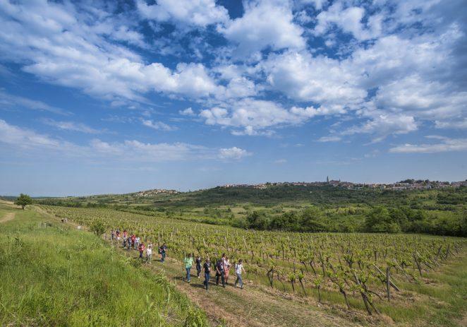 Istria Wine & Walk 09.10.2021.